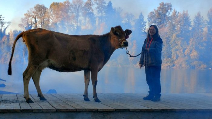 Talented-Animals-First-Cow-scaled-e1584284355150